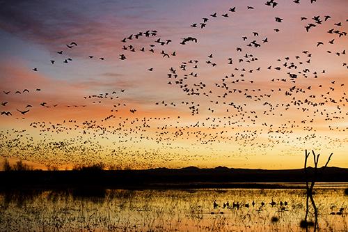 Goose Hunting Wallpaper Photo 23
