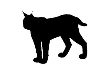 Balkan Lynx Silhouette