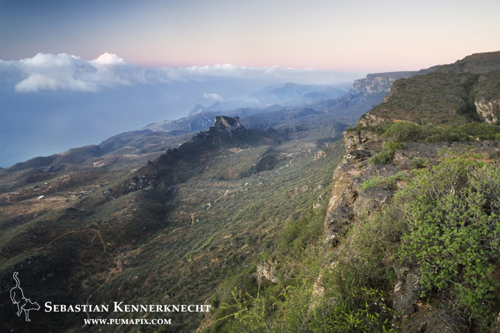 Shrubland, forest, and rocky outcrops are the perfect Arabian Caracal habitat - Hawf Protected Area, Yemen