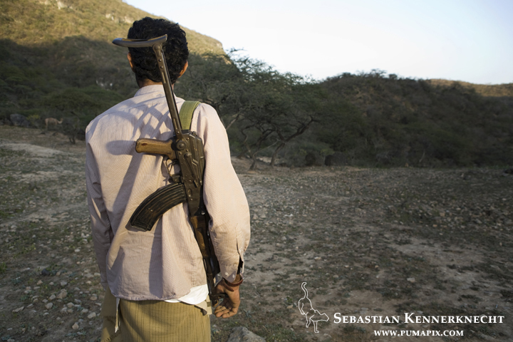 Hunting is the major threat to Arabian Caracals - Hawf Protected Area, Yemen