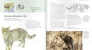 Chinese Mountain Cat species pages in Luke Hunter's Wild Cats of the World Book