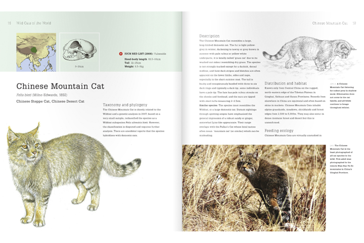 Chinese Mountain Cat species pages in Luke Hunter's Wild Cats of the World Book - drawings by Priscilla Barrett, photograph by Tashi Sangbo